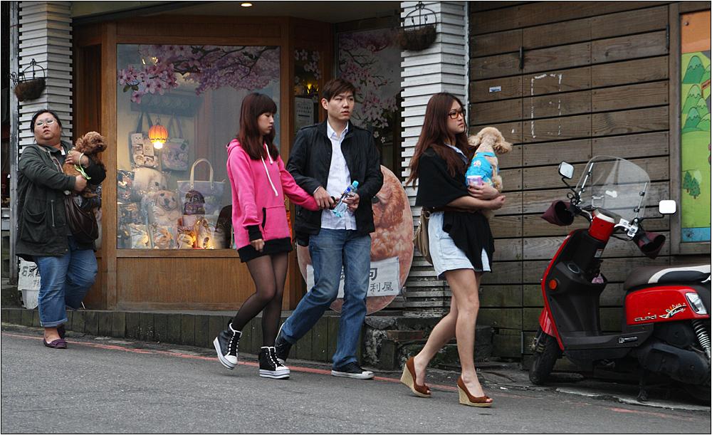 """der trend zum """"kleinhund"""" in taiwan ist unübersehbar ;-)"""