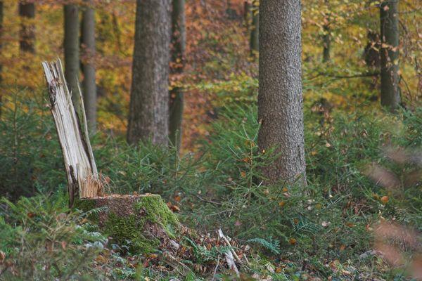 Der Trohn vom Herren des Waldes