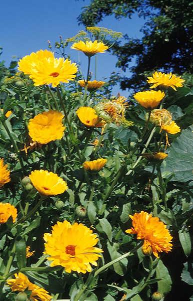 Der Turm der kleinen gelben Blumen (Titel gesehen by Franz Marc)