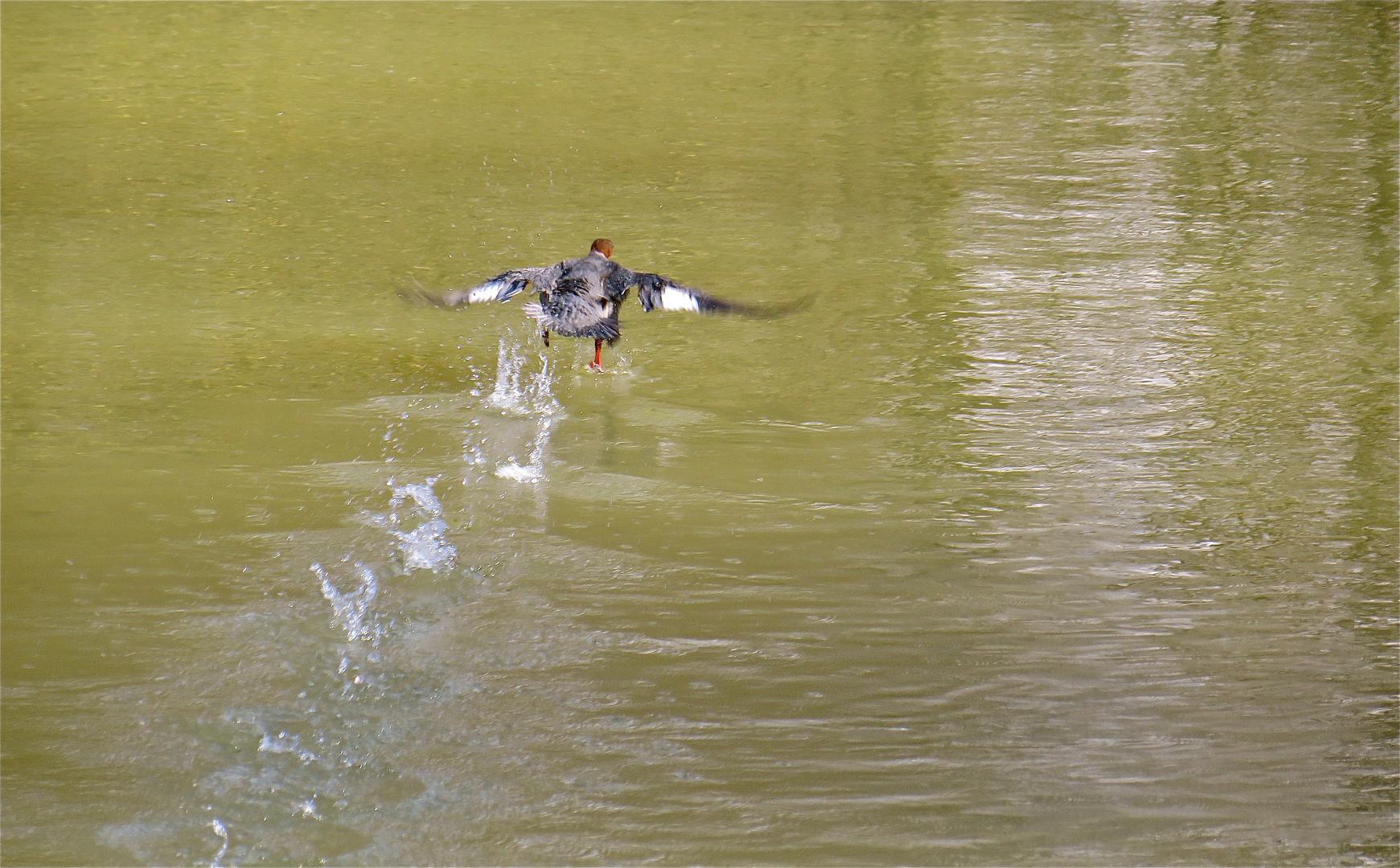 ...der übers Wasser geht !!!...