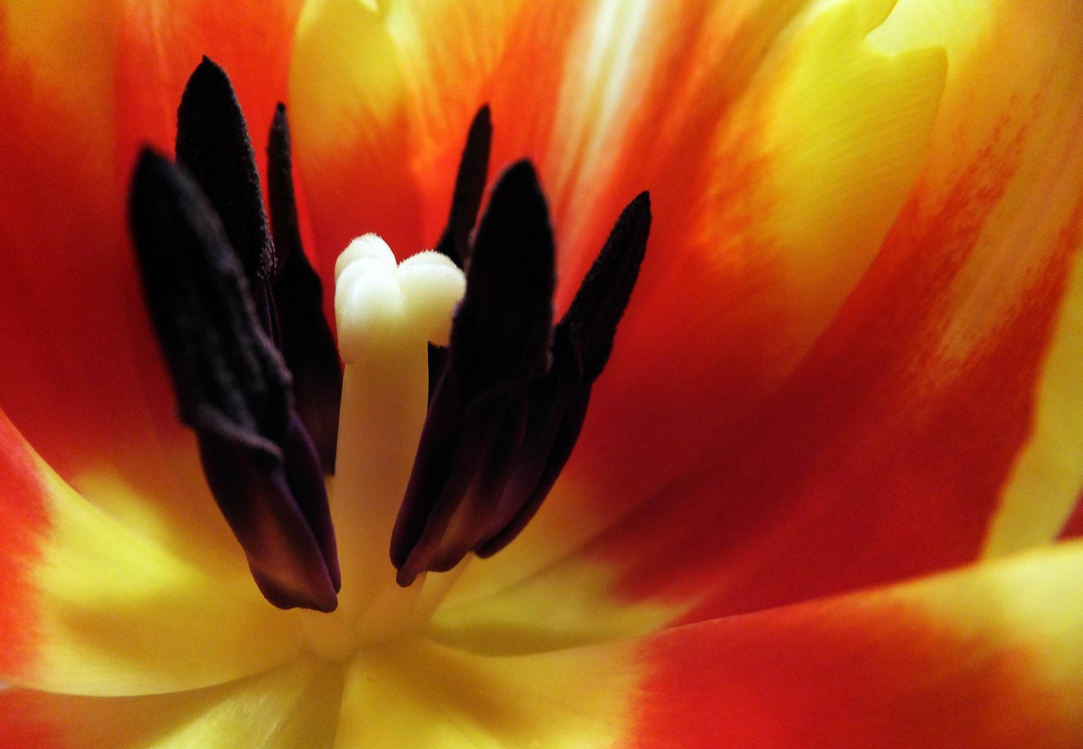 Der ultimative Tulipblick
