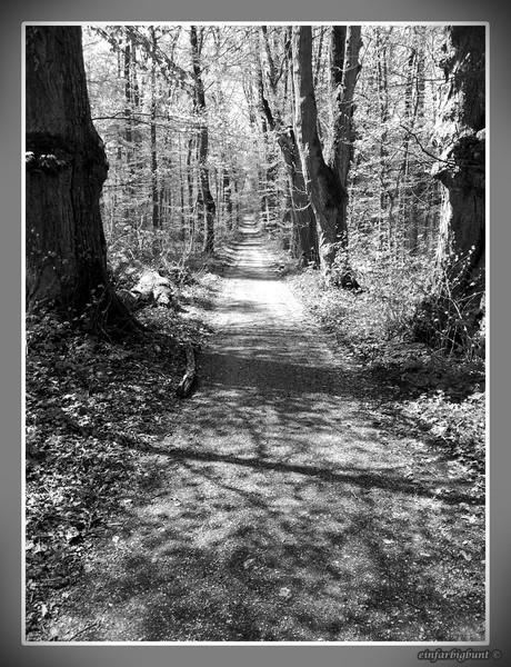 Der unbekannte Weg