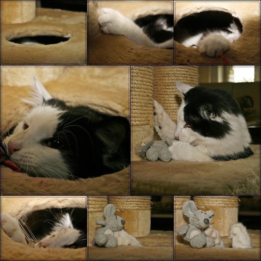 Der unheimliche Mäusedieb schlägt wieder zu :-))))