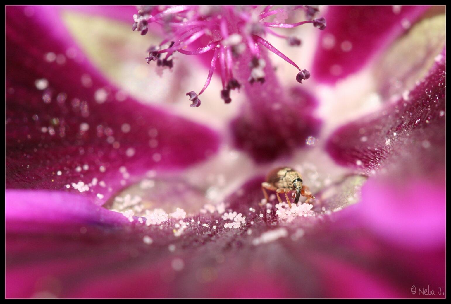 Der unsichtbare Gärtner