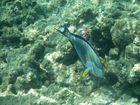 Der Unterwasserflieger Hurghada-Ägypten