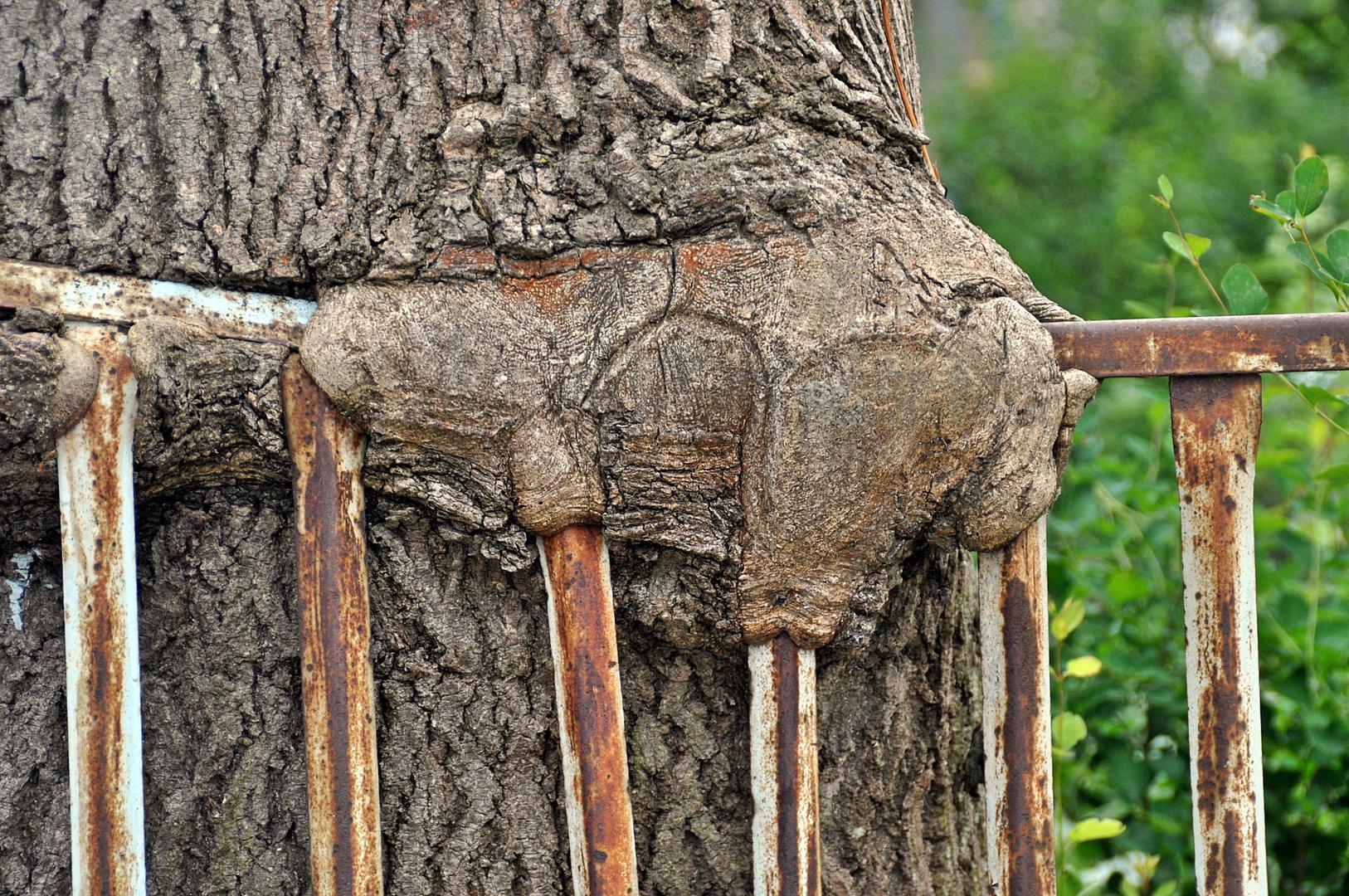 Der verfressene Baum