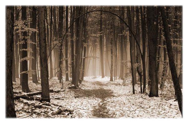 Der vergessene Wald