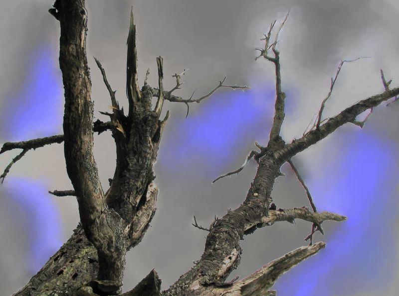 Der verletzte Baum