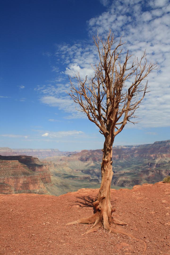Der verlorene Baum