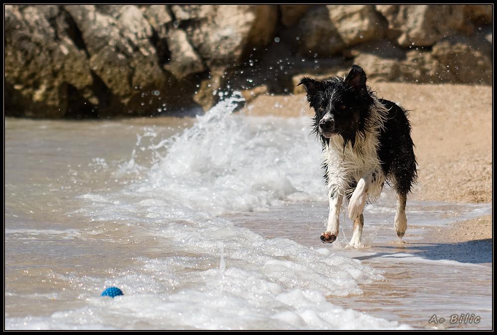 Der verspielte Luke und das Meer