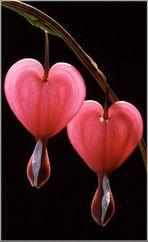 Der Verstand sucht, das Herz findet !