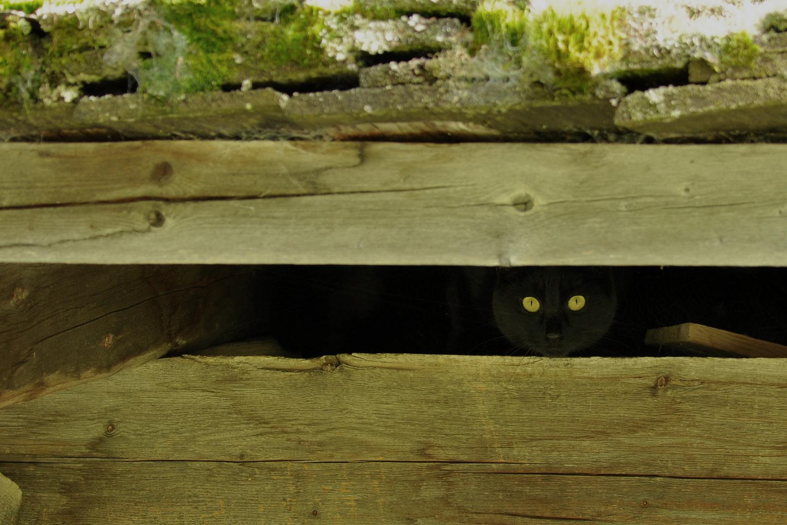 """Der versteckte """"Augen""""-Zeuge"""