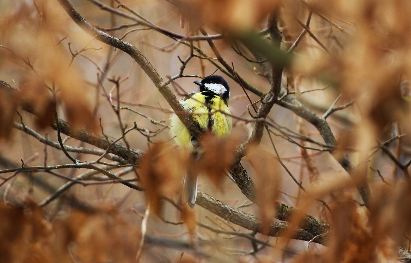 Der versteckte Vogel