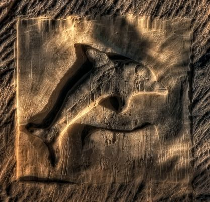 --- Der versteinerte Delfin ---