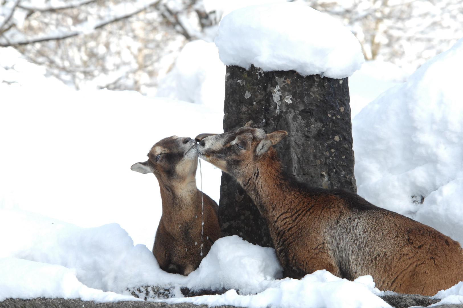 Der viele Schnee gibt Durst