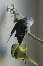 Der Vogel - Das Spielzeug