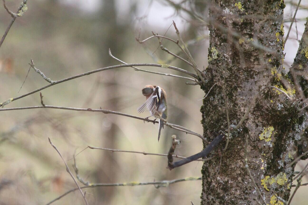Der Vogel im Baum