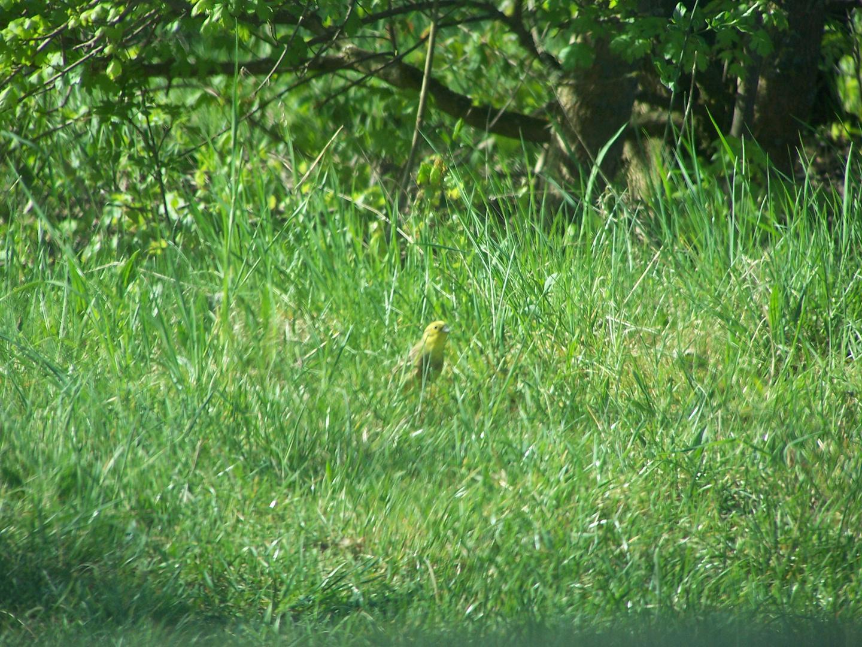 Der Vogel im Gras