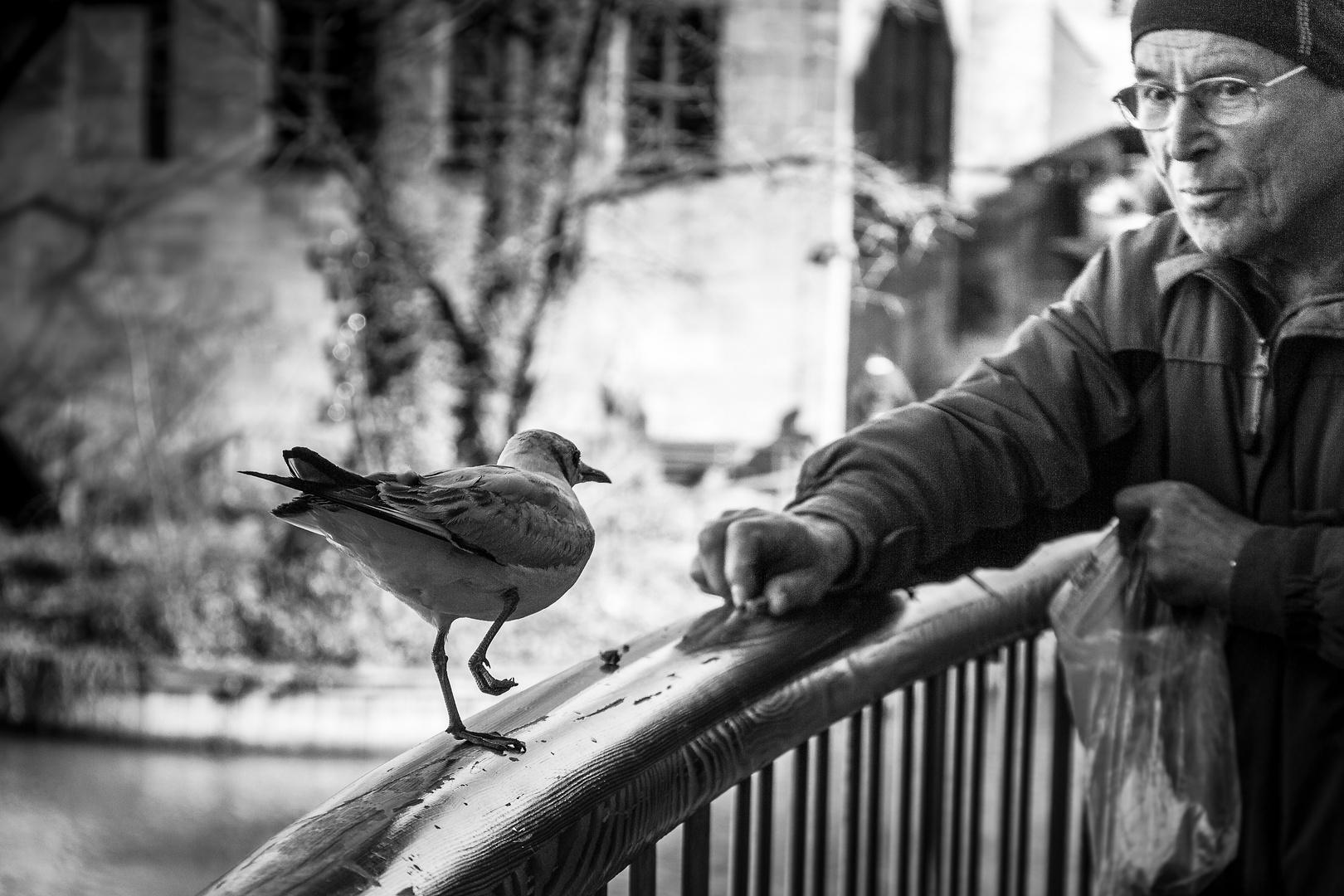 Der Vogelflüsterer