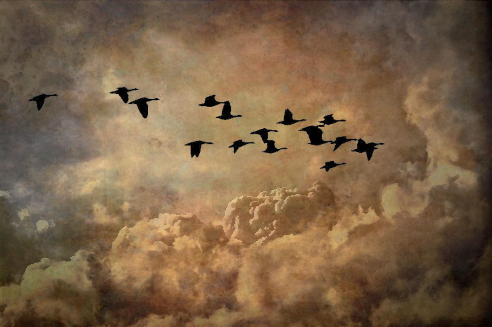 Der Vogelflug