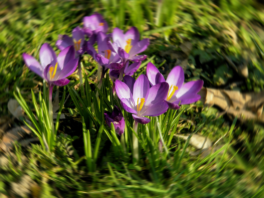 Der vorzeitige Frühlingsanfang !