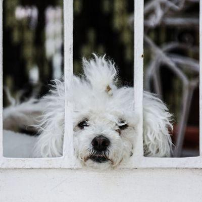der Wachhund...
