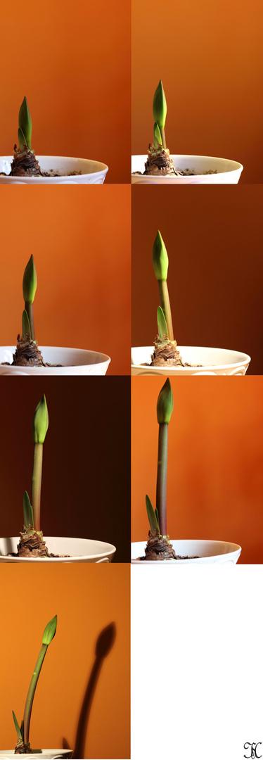 Der Wachstum