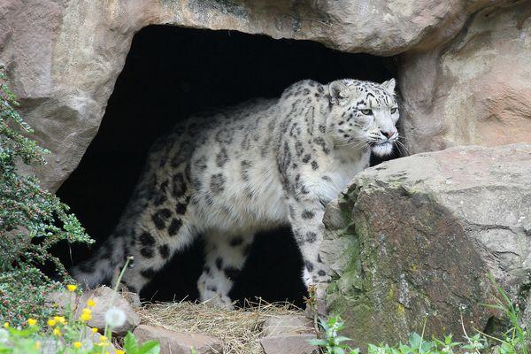 Der Wächter der Höhle