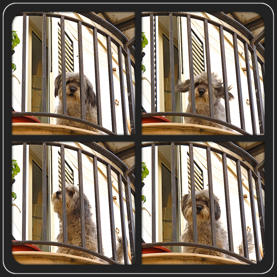 Der Wächter des Balkons / Il guardiano del balcone