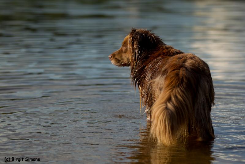 Der Wächter des Sees!! ;-)