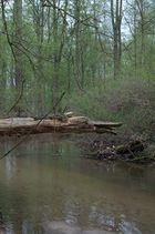 Der Wächter im Wald