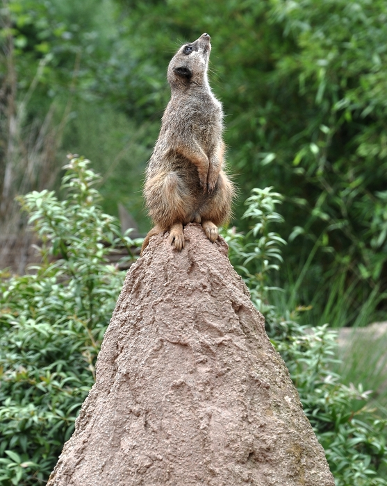 Der Wächter von Leipziger Zoo...........