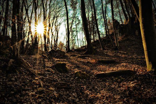 Der Wald...