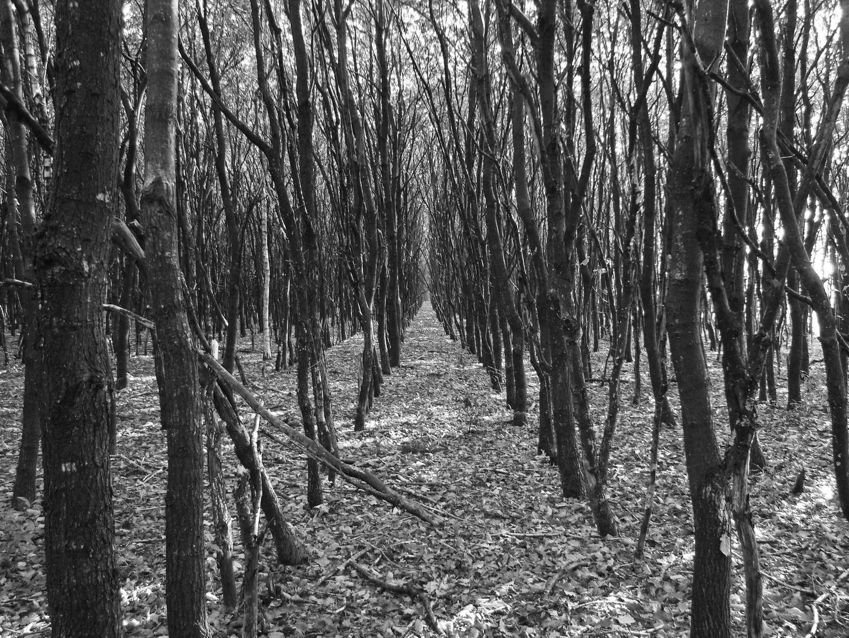Der Wald das Labyrinth