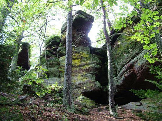 Der Wald der Kelten