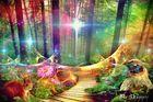 Der Wald der wunderbaren Lichter.....