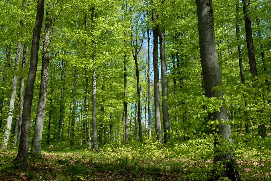 Der Wald im Frühling...