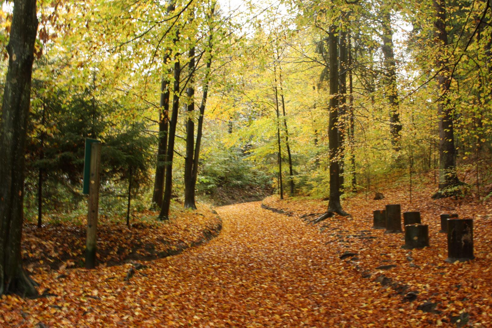 Der Wald im Herbst