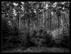 Der Wald im Wald