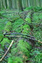 Der Wald in seiner natürlichsten Form