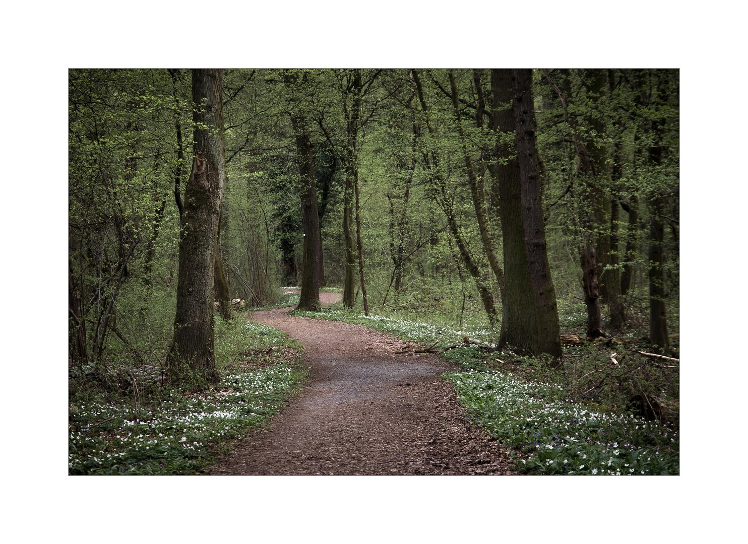 Der Wald ist ein besonderes Wesen