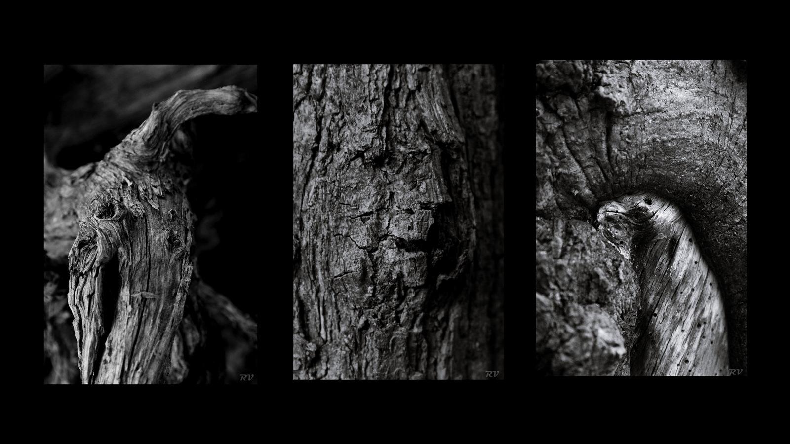 ...der Wald lebt!