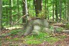 der Wald lebt