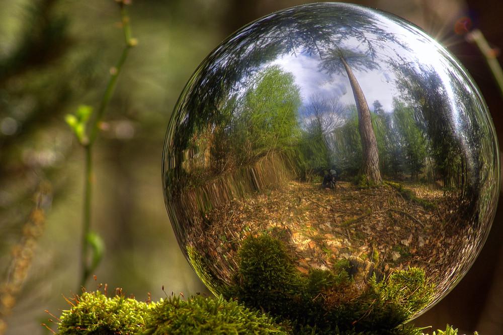 Der Wald ! mal anders.