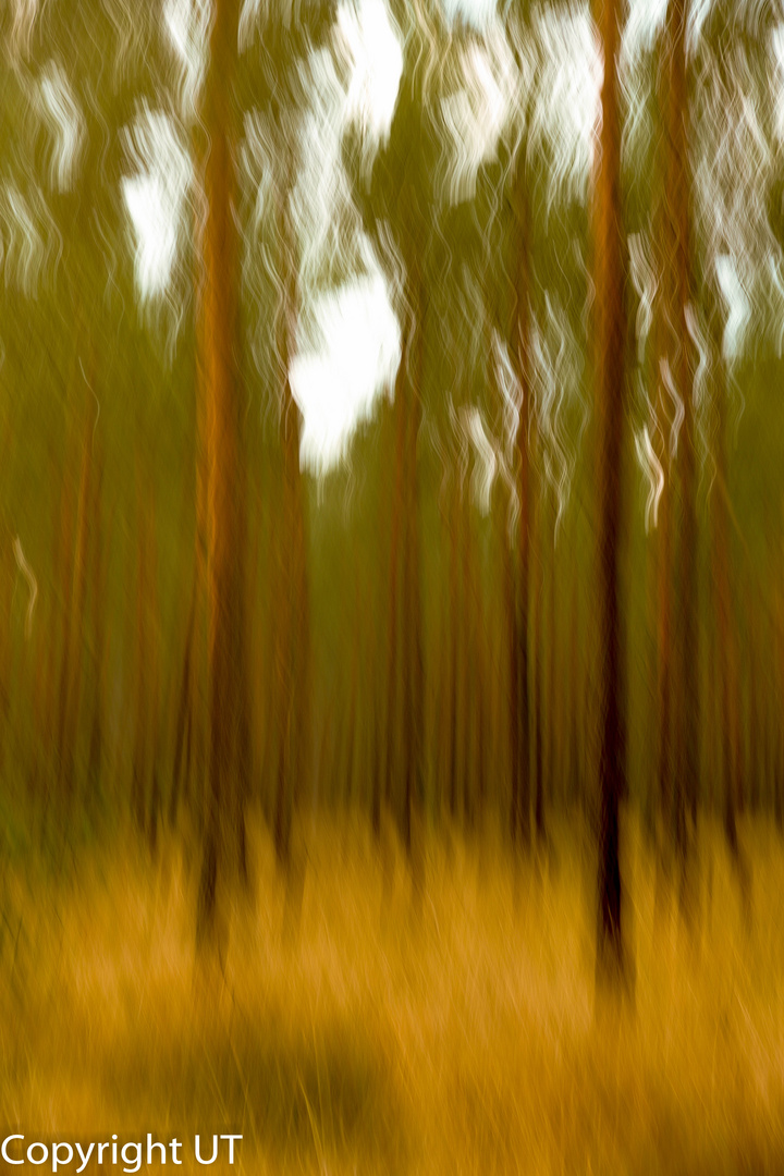 Der Wald mit verschwommenen Blick!