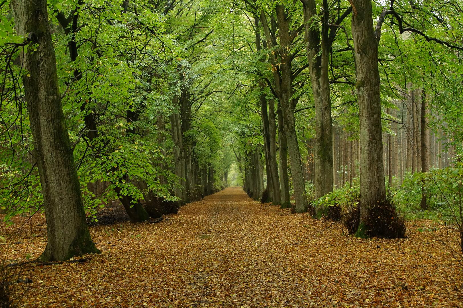 Der Wald steht still und schweiget ...