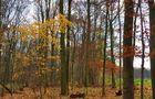 Der Wald verliert langsam ihre Stimmung von Rosmarie Haase