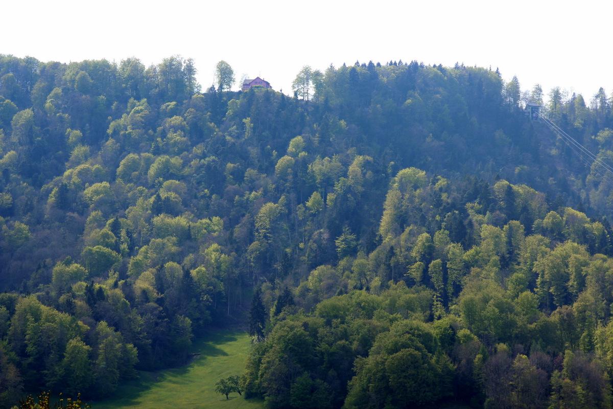 der Wald vis-à-vis ...