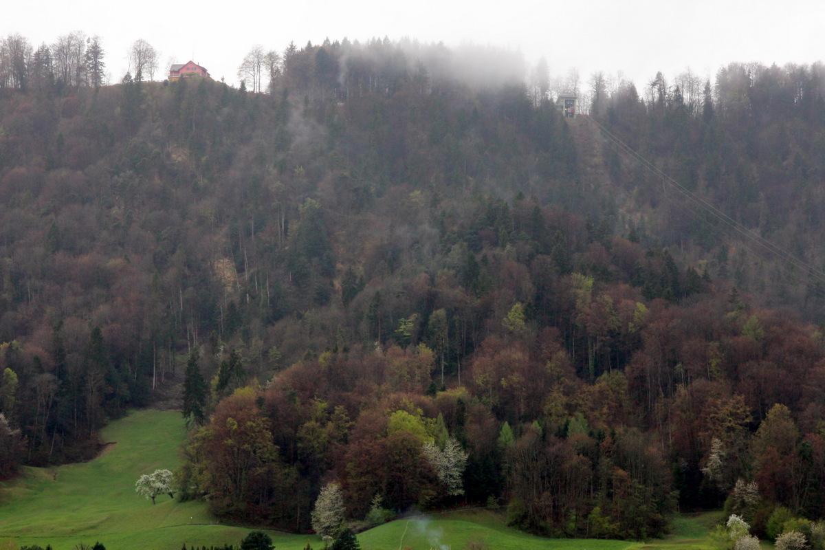 der Wald vis-à-vis ... II