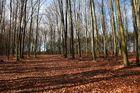 Der Wald voll lauter Bäume